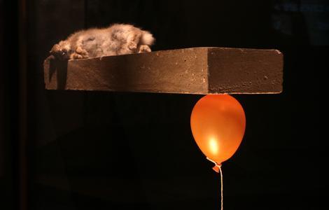 Polly Morgan's contemporary taxidermy piece inspired Sian. Photo by Becky Farmer