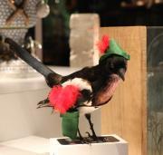 Sian's magpie. Photo by Hannah Jones